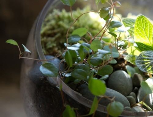 Create your own Terrarium in 8 Easy Steps