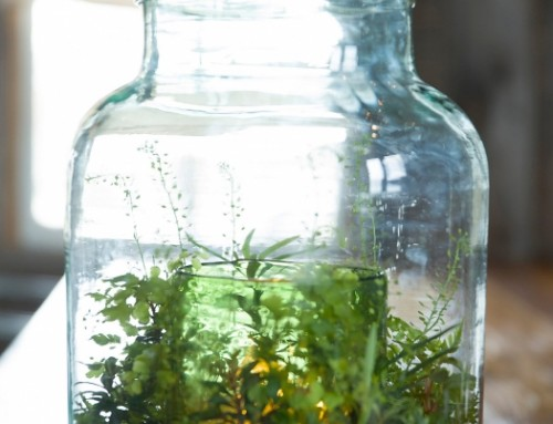 Where's the Best Spot for a Thriving Terrarium?
